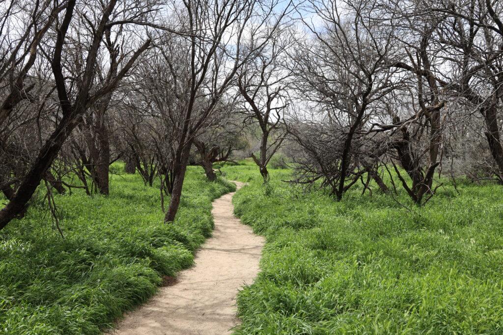 Birding trail