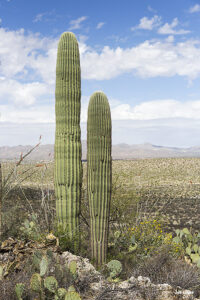 RCT-13 Romero Canyon... GPS Coordinates: N 32.2521 W -110.5332
