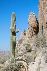 RCT-31 Romero Canyon... GPS Coordinates: N 32.2514 W -110.5312